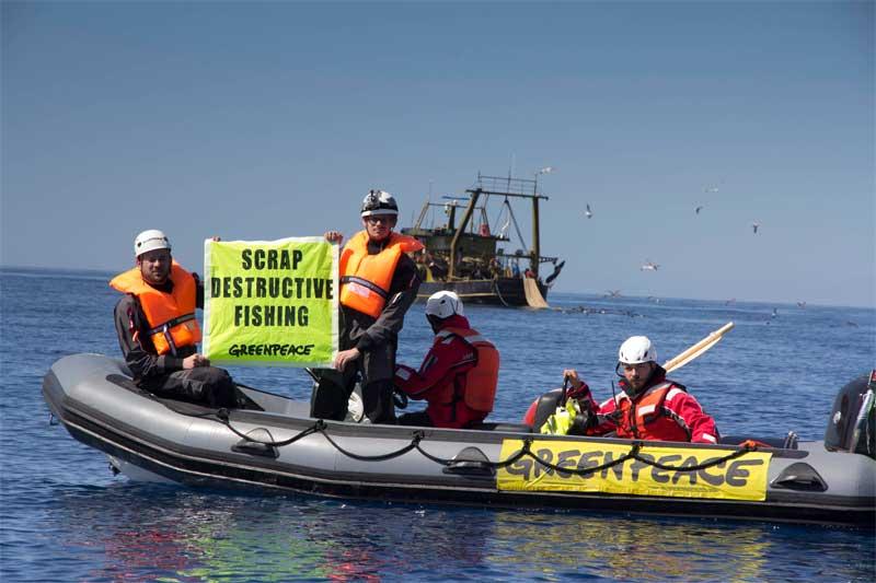 Pesca selvaggia greenpeace aiutiamo il mare ecco quali for Comprare pesci