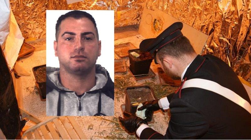 Scoperta serra artigianale di marijuana in casa: arrestato 30enne