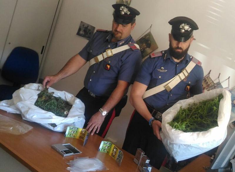 Agrigento, arrestato pensionato con 55 piante di marijuana