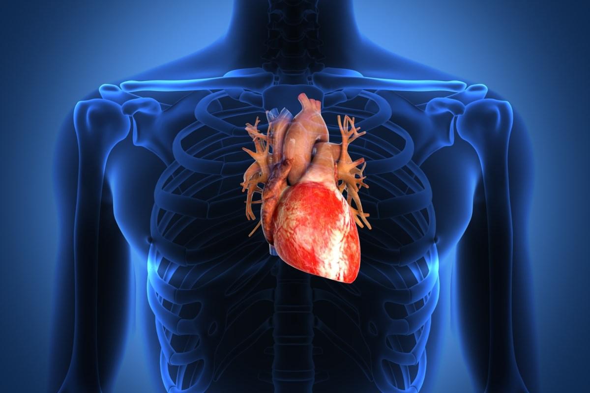 """Sperimentato sui maiali il primo pacemaker """"sostenibile"""": si ricarica con il battito cardiaco"""