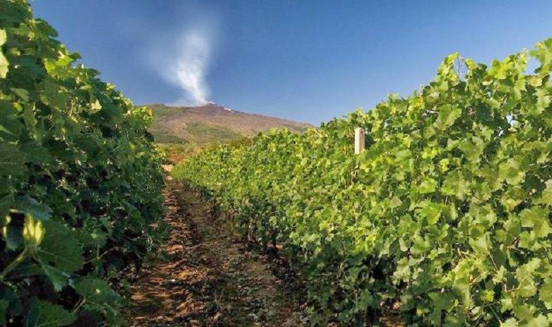 Sicilia, unica regione italiana nella top ten mondiale dei wine lovers