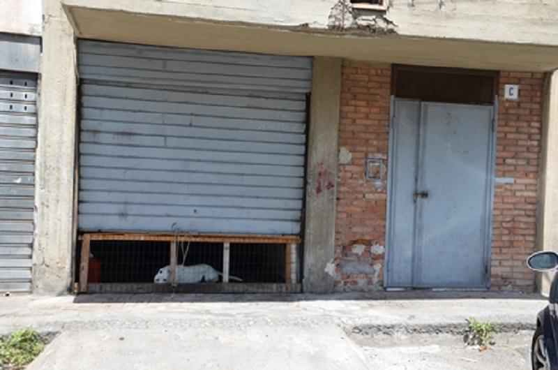 Pitbull, Yorkshire e Rottweiler maltrattati: segregati in garage o lasciati sotto il sole. IL VIDEO