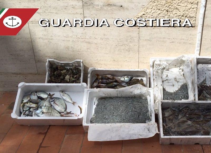 Cibo in cattive condizioni: oltre 12 tonnellate di pesce sequestrato