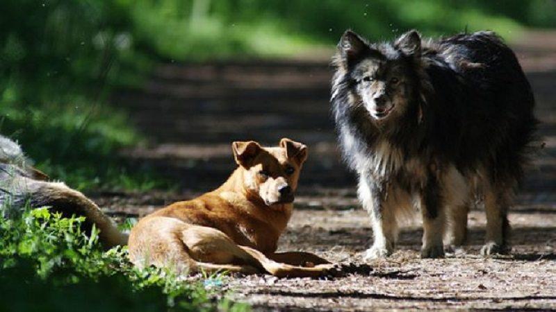 Strage di cani e avvelenamenti a Sciacca: denunciata la sindaca