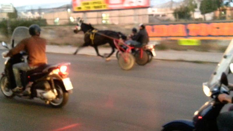 Corse clandestine di cavalli: i carabinieri scoprono tutto grazie ai social, 5 denunciati