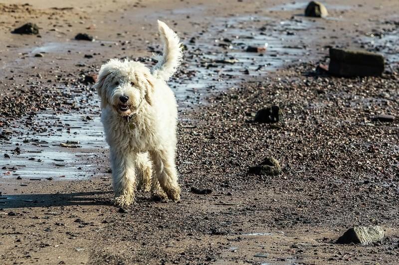 """Spiagge per cani, Sicilia """"maglia nera"""": sono pochissime e molto costose"""