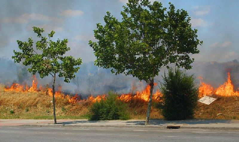 Fiamme nel bosco: fermato con materiale per appiccare incendi, poi fugge dai domiciliari