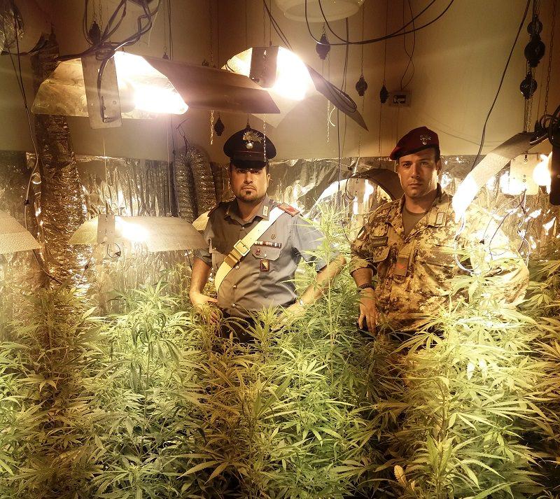 Gli perquisiscono il casolare e trovano 90 piante di Cannabis: arrestato 43enne