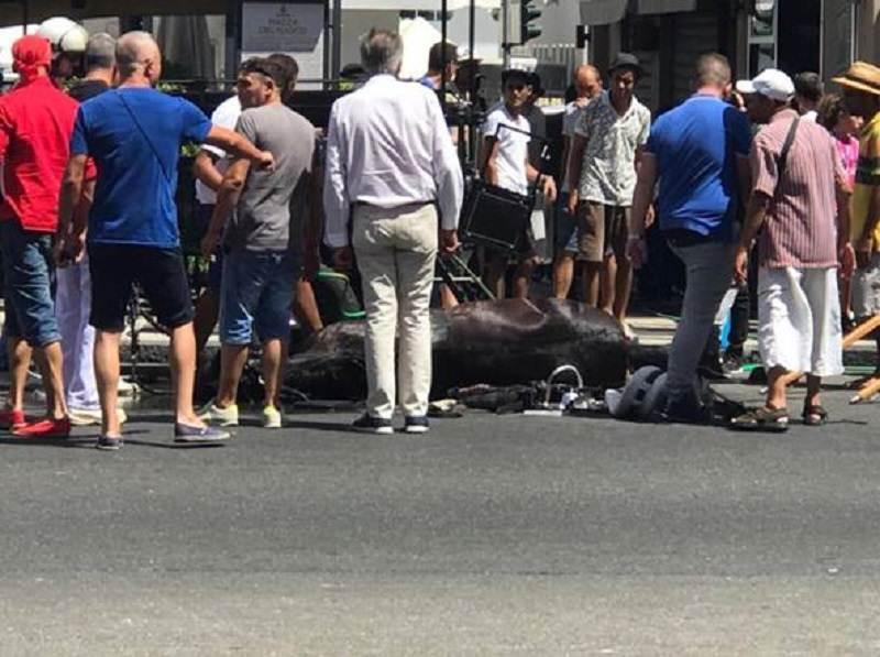 Portava i turisti in giro per Messina anche nelle ore più calde, cavallo Oliver è morto