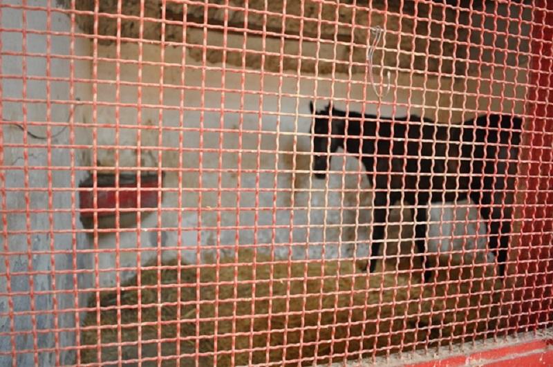 San Cristoforo: cavalli tenuti in pessime condizioni, trovati anche anabolizzanti