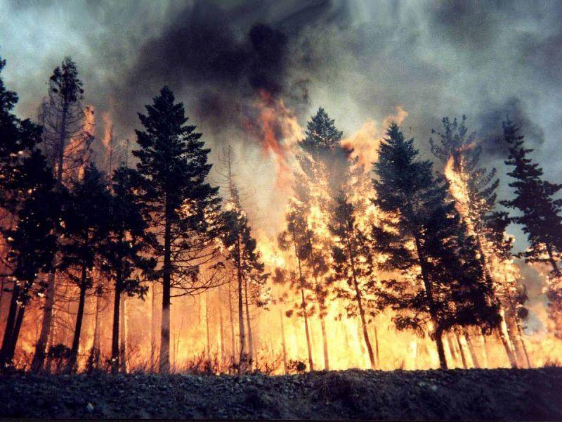 Rischio incendi in Sicilia: la Regione mette sul tavolo 50 milioni per la tutela dei boschi
