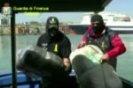"""Operazione """"Rosa dei Venti"""": sgominata banda criminale italo-albanese per traffico di armi e sostanze stupefacenti. VIDEO"""