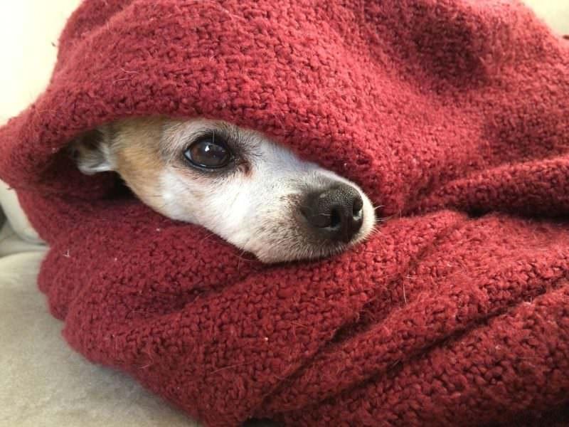 Cani e petardi: piccola guida per la (loro) sopravvivenza