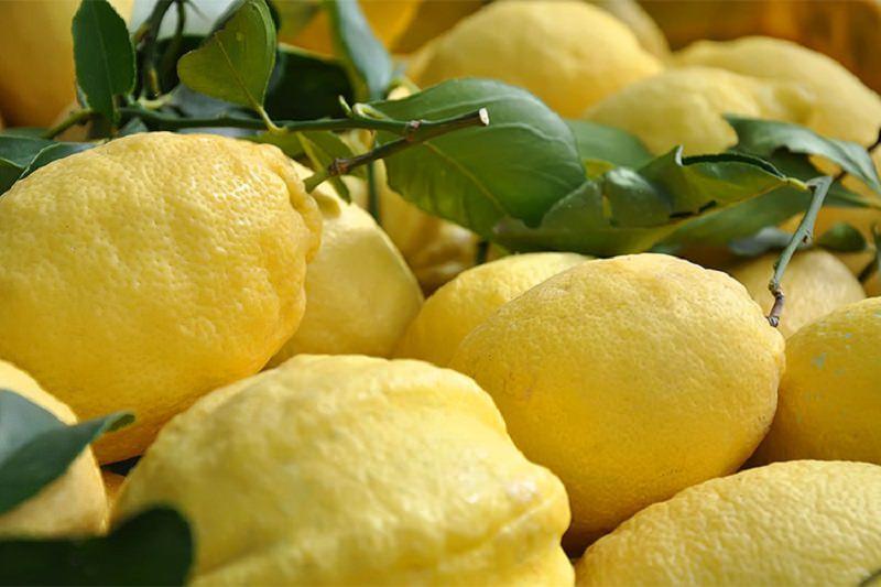 Rubano 200 chili di limoni, ma vengono bloccati dal proprietario del terreno: denunciati 3 ladri
