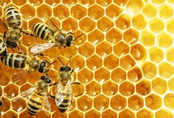 Il miele: l'effetto dell'azione umana sulla natura