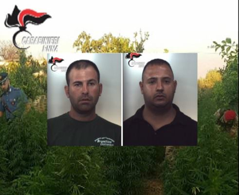 Enna, 250 piante di cannabis in un terreno: arrestati due catanesi incensurati – VIDEO e FOTO