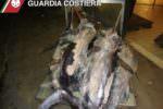 Blitz al mercato ittico di Acitrezza: sequestrato pesce spada non idoneo al consumo umano