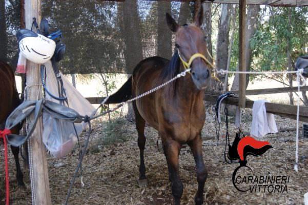 Catania, teneva cavalli in locali fatiscenti e senza luce: denunciato 41enne