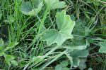 Scambiano erba selvatica per cicoria: avvelenata intera famiglia, tra cui una bambina di 5 anni