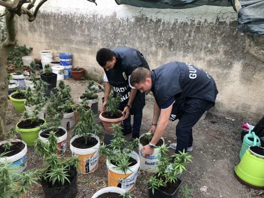 """Coltivava e spacciava marijuana alla """"Tonnarella"""": arrestato"""