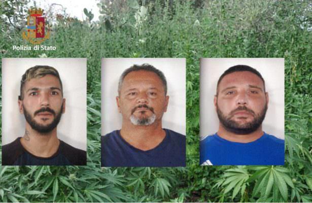 Gestivano piantagione di marijuana nel Catanese e spacciavano droga: tre arresti – FOTO e VIDEO