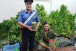 Scoperta piantagione di canapa indiana nel Catanese: in manette un 30enne