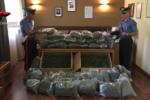 Naro, sequestrate una pistola detenuta da un dipendente comunale e 30 tonnellate di marijuana: sul mercato avrebbero fruttato 15 milioni di euro