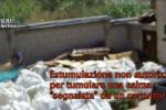 Corruzione e vilipendio di cadavere al cimitero: indagate 10 persone. VIDEO choc