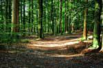 Vacanza si trasforma in tragedia: turista australiana colpita da un albero muore dopo un mese