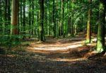 Cadavere di donna ritrovato nei boschi di Caronia: è la zona in cui si cercano Viviana Parisi e il figlio Gioele
