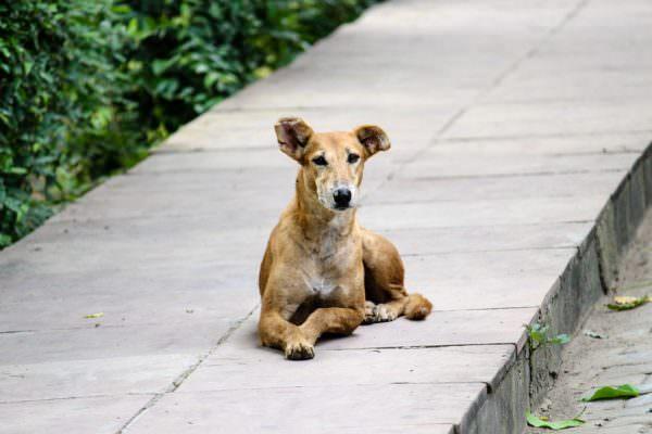 Investe cagnolino e lo uccide, 45enne messinese denunciato a piede libero