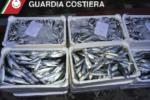 Blitz alla pescheria di Catania: sequestrati 4 quintali di tonnetti, spadotti e neonato venduti illegalmente
