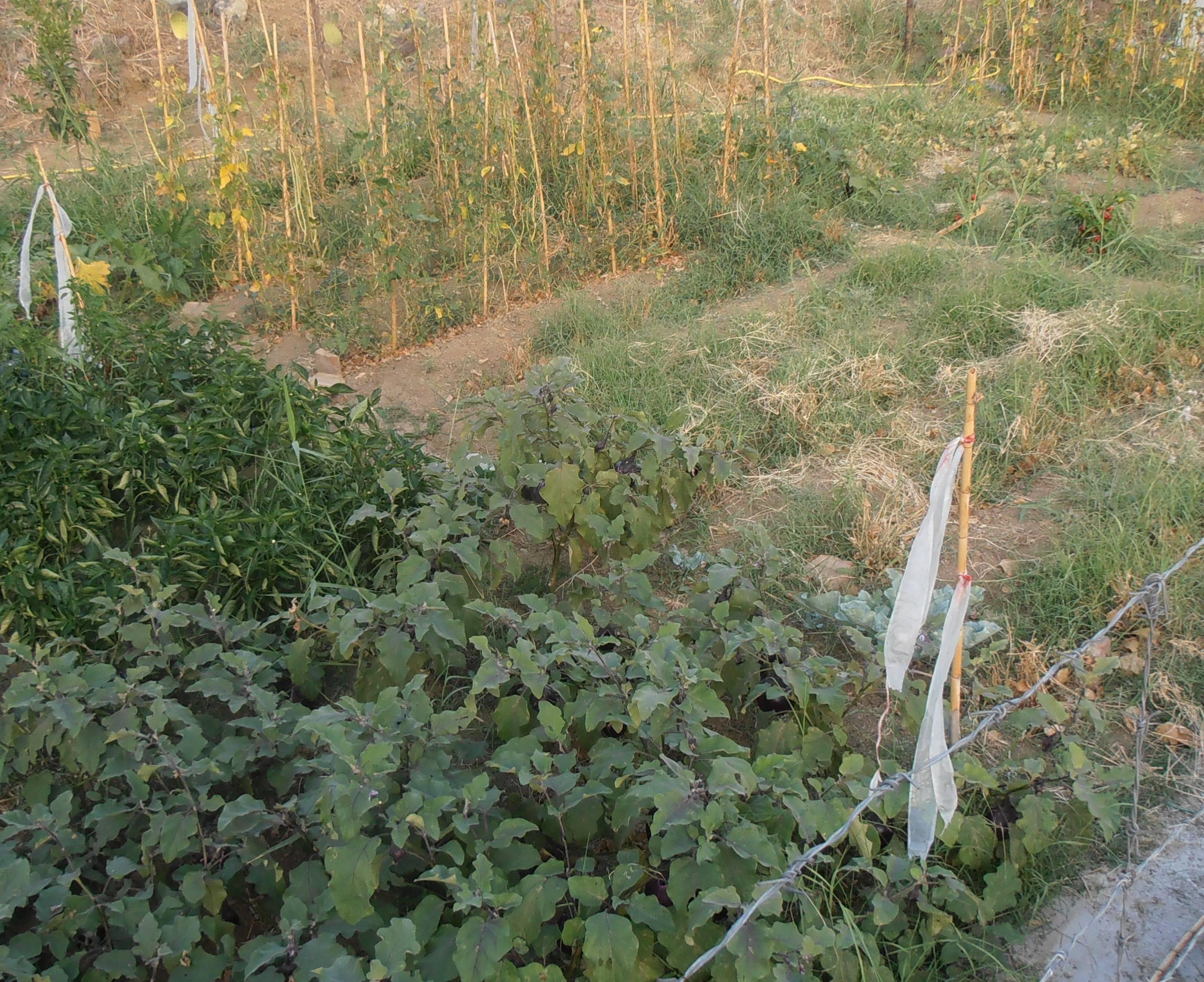 """Recupero aree abbandonate della IV municipalità, Buceti: """"L'amministrazione le trasformi in spazi verdi aggregativi"""""""