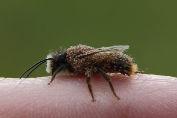 Pericoli dentro casa, l'invasione degli acari della polvere: allergia e dermatite
