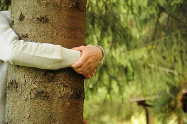 Urna Bios e Capsula Mundi: come diventare un albero dopo la morte
