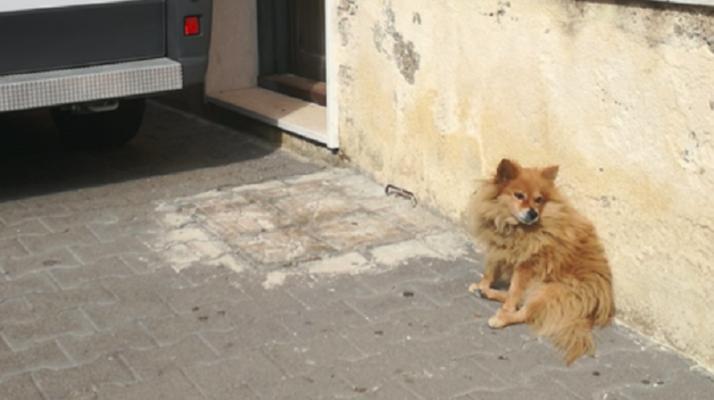 """L'amore oltre ogni cosa… il padrone muore e il volpino lo aspetta da tre anni. Un """"Hachiko"""" in Sicilia"""