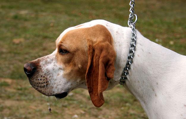 """""""Cattiveria allo stato puro, è imperdonabile"""". Sdegno e rabbia per l'avvelenamento di due cani nel Siracusano"""