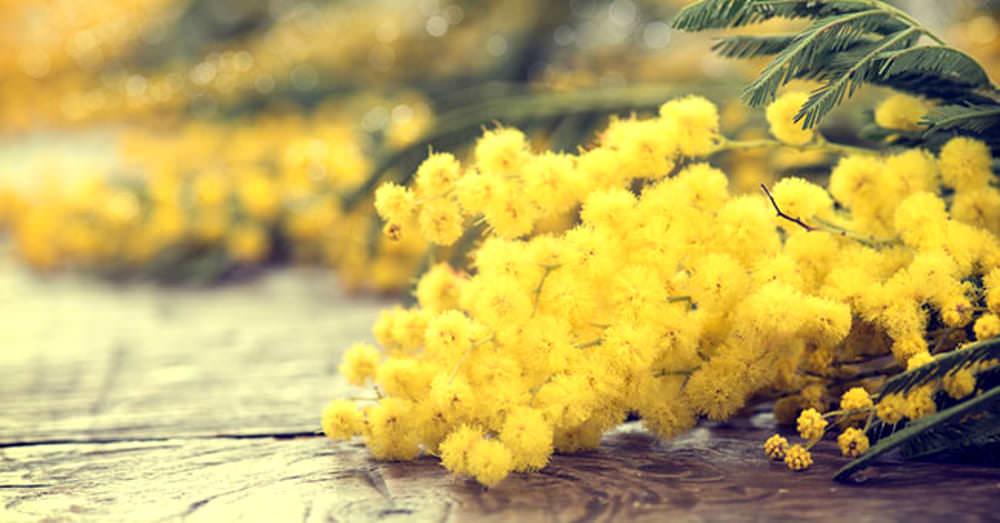 Donne, oltre alle mimose c'è di più