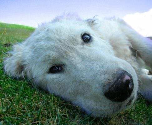 Prende a calci e trascina per le orecchie il suo cane per punirlo: denunciato 21enne