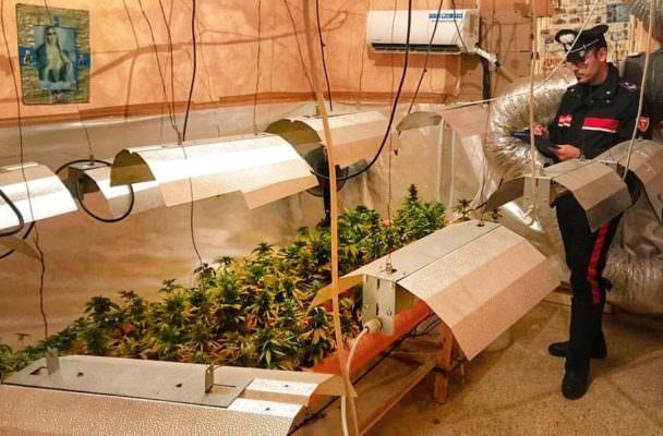 Trovati con più di 200 piante di marijuana in casa, arrestati due fratelli
