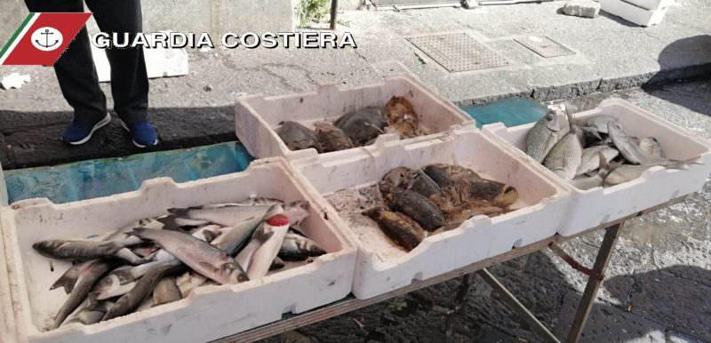 Catania, blitz in due pescherie del mercato rionale e in un ristorante di Aci Trezza: scattano i sequestri