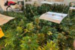 Serra in casa per coltivare droga, guadagni choc e furto per diverse migliaia di euro: tre arresti