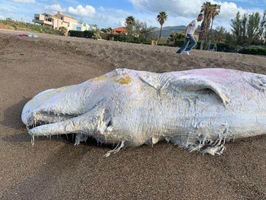 Terzo capodoglio trovato morto sulle spiagge siciliane: è allarme