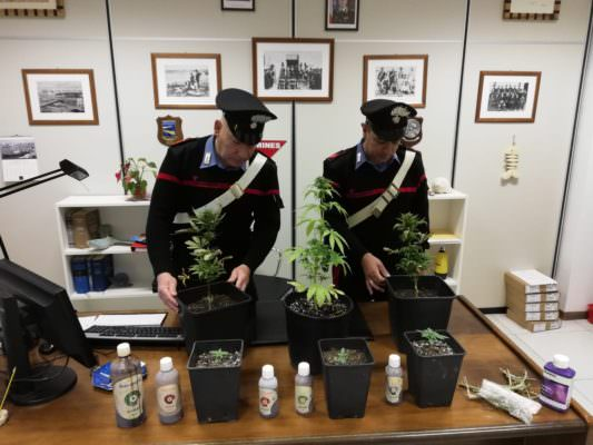 Coltivava marijuana in casa: in manette 34enne