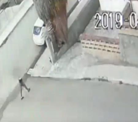 Appicca il fuoco a una palma per strada e danneggia un'auto: denunciato 18enne – VIDEO