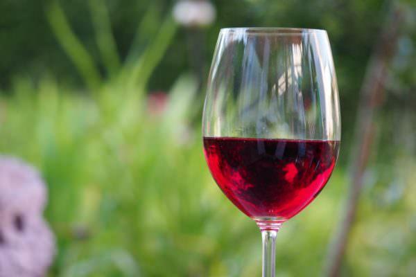 La cultura del vino tra risultati record e nuove opportunità per i giovani