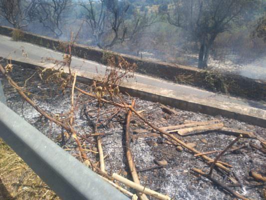 """Emergenza incendi a Catania, in fiamme il Parco Monte Po. Parisi: """"La situazione non si è complicata grazie a pompieri e polizia"""""""