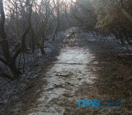 """Flora Riserva Saline di Priolo devastata dalle fiamme, Cilea: """"Fenicotteri saranno il simbolo della rinascita"""""""