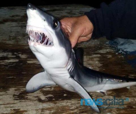 """Catania, catturati una decina di squali a Ognina. Capitano Platania: """"La loro dentatura non è da sottovalutare"""""""