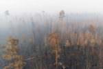 INCENDI IN SIBERIA, GREENPEACE LANCIA L'ALLARME CLIMA